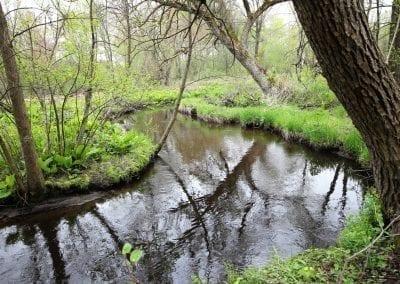 Bird Creek 2019 Habitat38